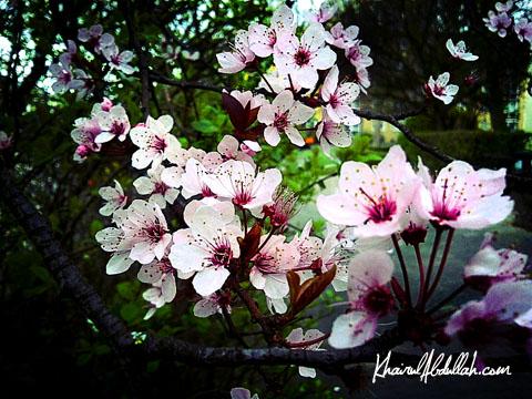 spring2012-7